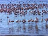 Aerial View Of Flamingos In Lake