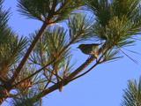 Small Bird In Tree