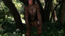 Orangutan Plays
