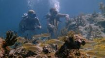 Divers Explore Coral Reef