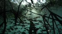 Fish Among Mangrove Roots