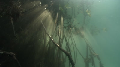Underwater mangrove forest with sunrays