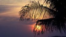 Sunset View Through Palms Leaves At A Tropical Beach.