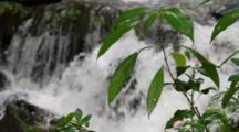 Waterfall And Tropical Vegetation