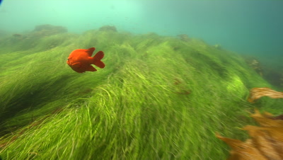 Stock Footage of Fish in Sea Grass