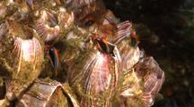 Barnacles Feeds