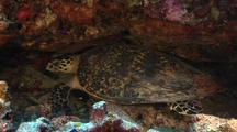 Sea Turtle In Cave