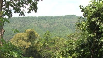 3D Rainforest Landscapes