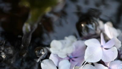 Pastel hydrangea flowers float and rest at the lower portion of the screen.