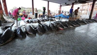 Row of large sharks at fish market