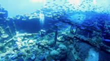 Diver Surround By Shoal Of Fish On Top Of Wreck