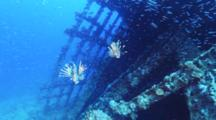 Pair Of Lionfish And School Of Glassy Sweepers On Wreck