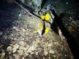 Cube Boxfish Swims Over Wreck