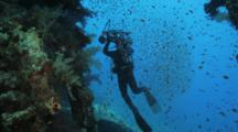 Silhouetted Diver Films Or Photographs Wreck