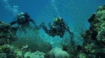 Divers On Reef With Sweepers Swimming In Synchrony
