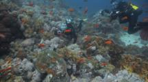Diver With Camera Photographs Sea Turtle