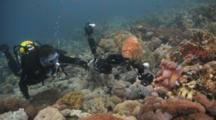 Diver With Camera Photographs Feeding Sea Turtle