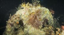 Crinoids, Basket Stars And Anemone On Wreck Structures At Night