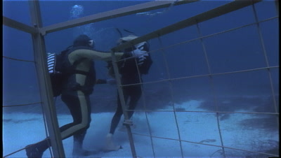 Diver Takes Mannequin Out Of Shark Cage For Great White Research