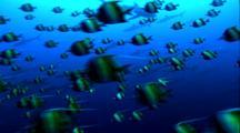 Schooling Fish - Moorish Idols, Large School Grey Reef Sharks Background