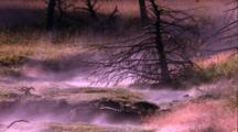 Thermal Activity, Hot Water Stream Meanders Over Grassy Clumps, Burned Pine Tree