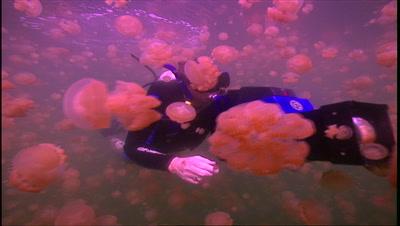 Divers - Diver Filming Jellyfish Swarm