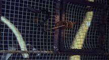 Sea Snakes In Cage