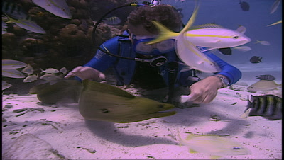 Diver Feeds Moray Eel