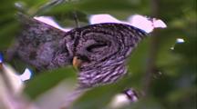 Owl Resting In Tree