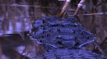 Alligator Lunges