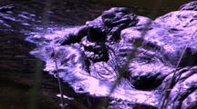 Alligator Head Eye Blinks