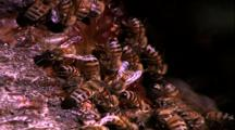 Bees Feeding Arthropods Biters And Stingers