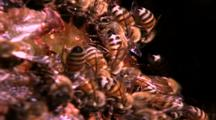Bees Feeding At Base Of Gumbo Tree