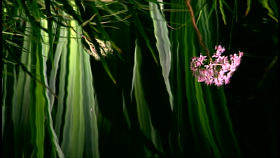 Water Reflection, Pink Flower And Spikey Leaves
