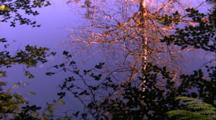 Water Scenics - Tree Reflection In Pond