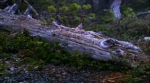 Rain And Snow, Hail, High Angle Shot Of Downed Log