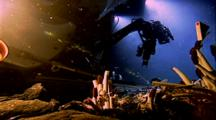 Alvin Submersible And Tube Worms