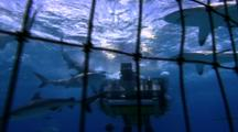 Oceanic Technology -  Flying Shark Cage Camera Set Up Underwater