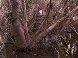 Cypress Tree Marsh
