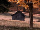Old Shed In Field