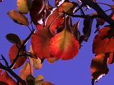 Autumn Tree Zoom To Leaf