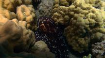 Tight Shot Of Octopus