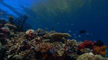 Locked Shot Of Coral Reef With Several Kinds Of Fish