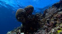 Locked Shot Of Coral With Colorful Fish