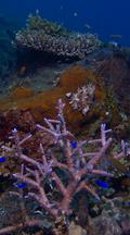 Vertical Locked Shot Of Healthy Coral Reef
