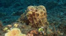 Closeup Of Cuttlefish