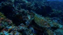 Sea Turtle Crawls Over Reef