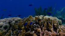 Locked Off Coral Reef Scenic