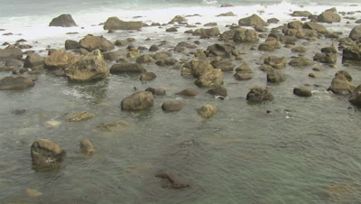Fly over large, spread out group of fur seals swimming along coastline