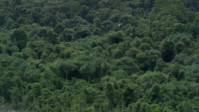 Tracking birds fly over rainforest